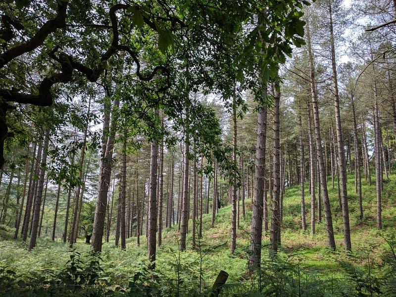 Cannock chase woods, staffordshire, uk